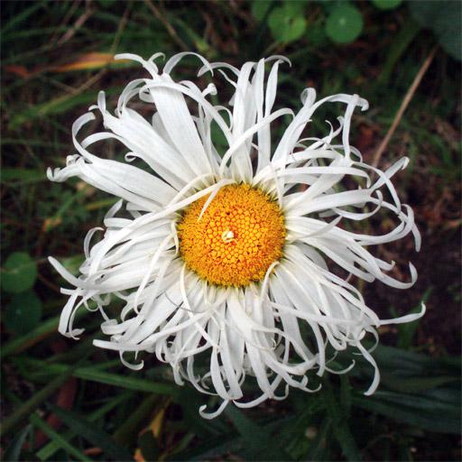Sarcastic flowery language